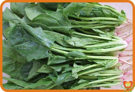 蔬菜配送-食材采购-菠菜