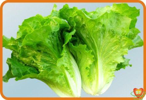 蔬菜配送-食材采购-生菜