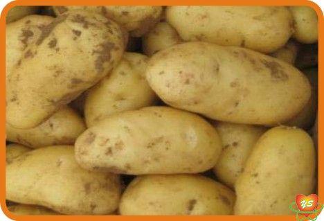 蔬菜配送-食材采购-土豆