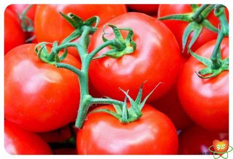 蔬菜配送-食材采购-西红柿