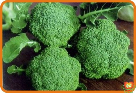 蔬菜配送-食材采购-西兰花
