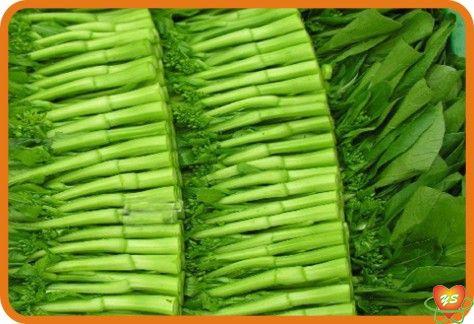 蔬菜配送-食材采购-油菜